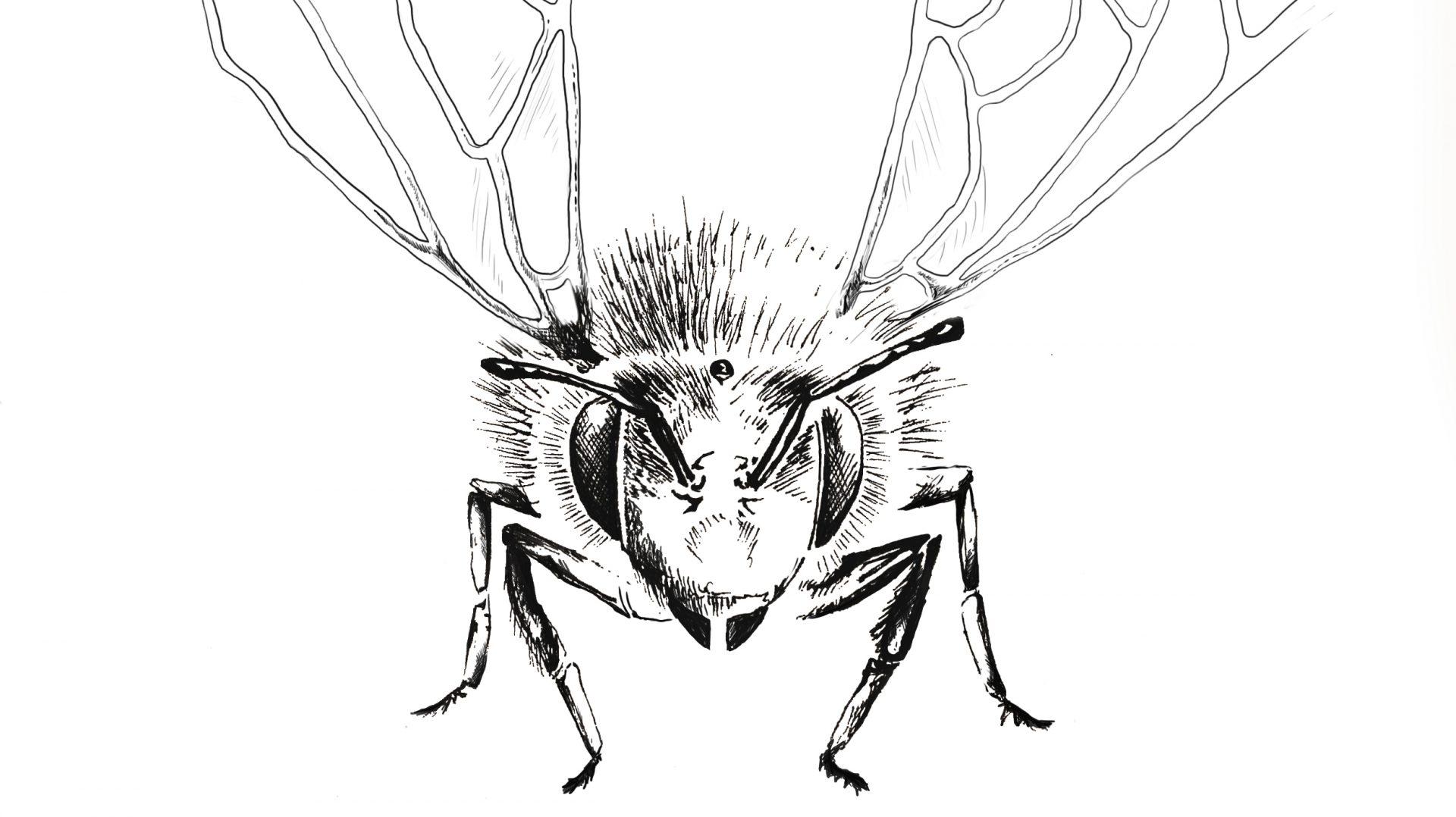 VČELAŘ FALTYS – kvalitní medy z Kunčí